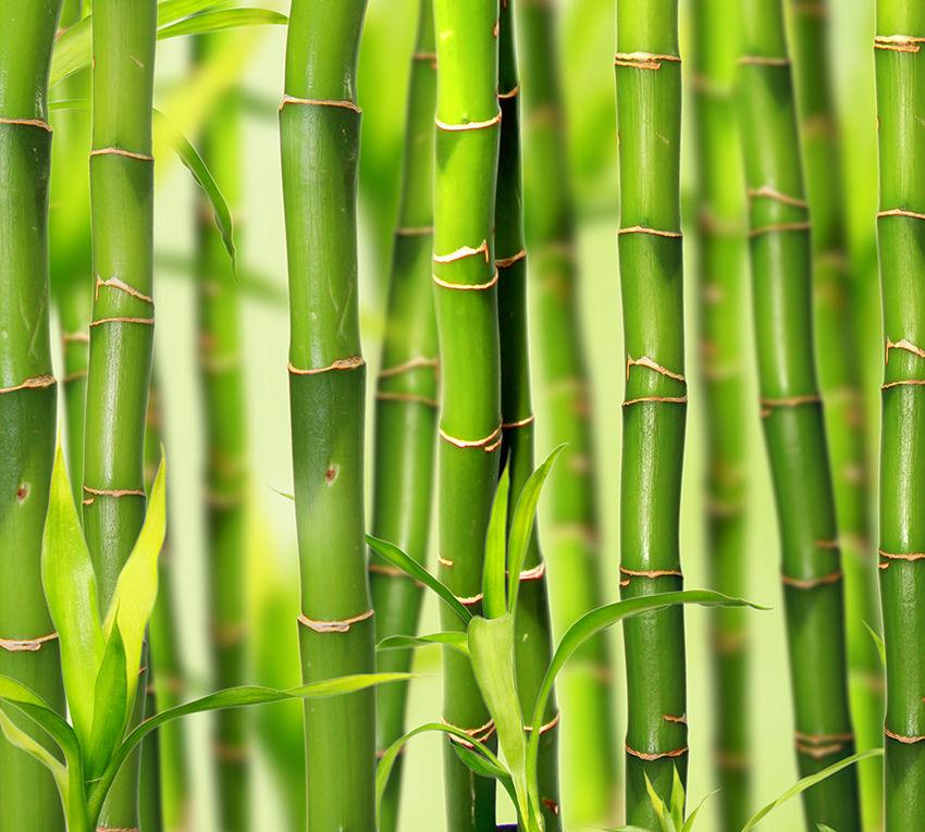 b1__098.bambuk.jpg