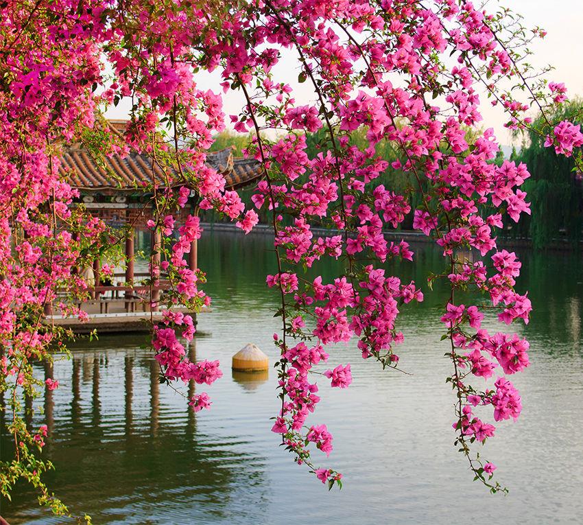 Цветы китай